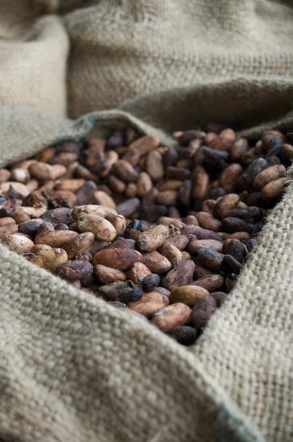 cacao ensacado seco