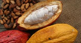 El mejor cacao es ecuatoriano