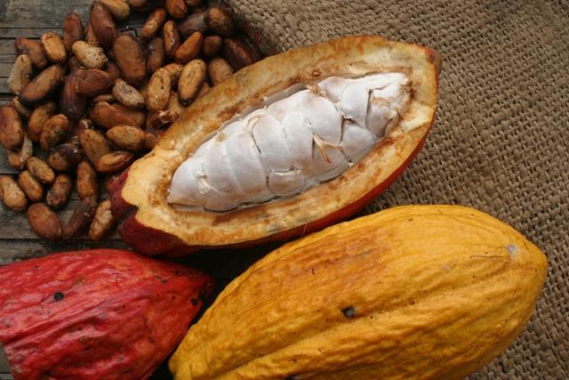 La calidad es sinónimo del cacao nacional
